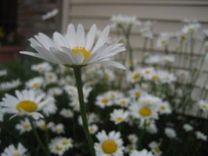 May_2007_073